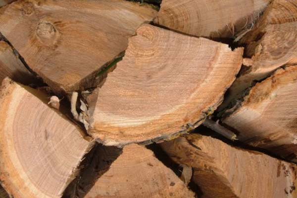 buy fresh cut firewood with bark and stack to season it yourself